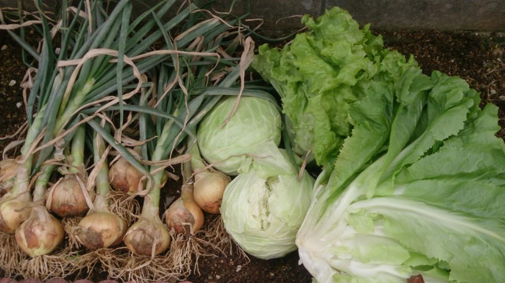 収穫した野菜の画像