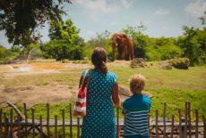 赤字経営が深刻な動物園の実態