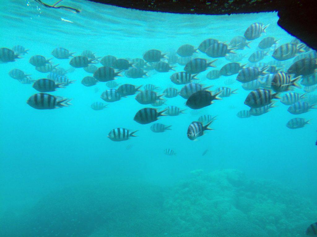 沖縄の海底巡り08