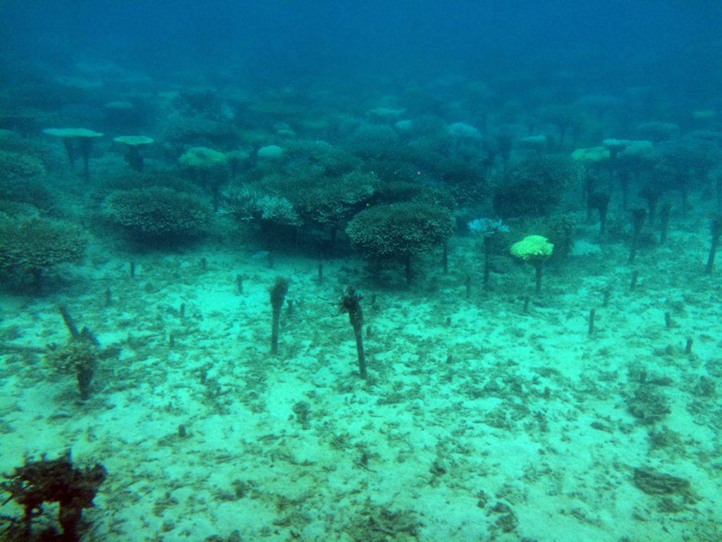 沖縄の海底巡り09