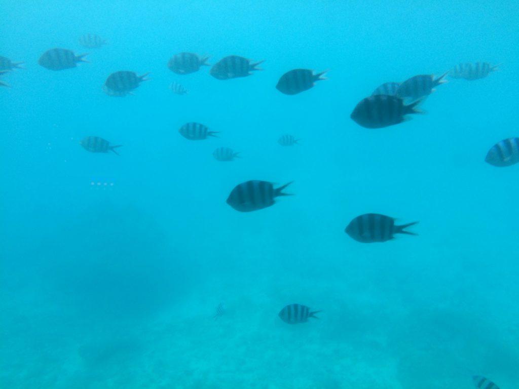 沖縄の海底巡り10