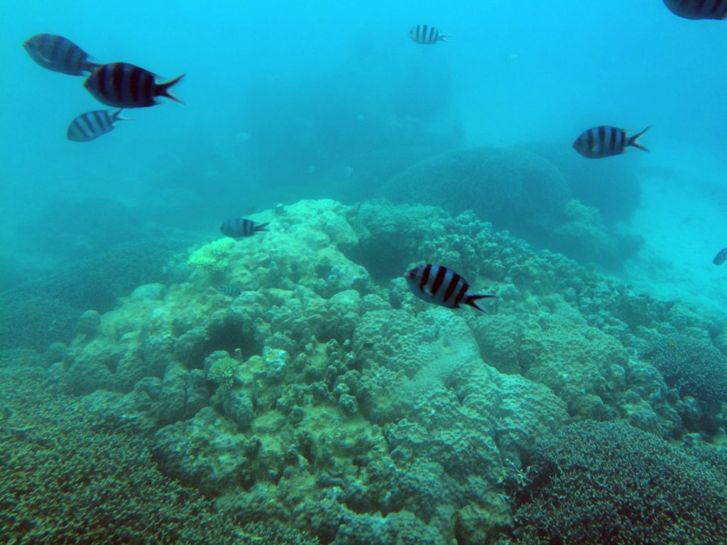 沖縄の海底巡り11