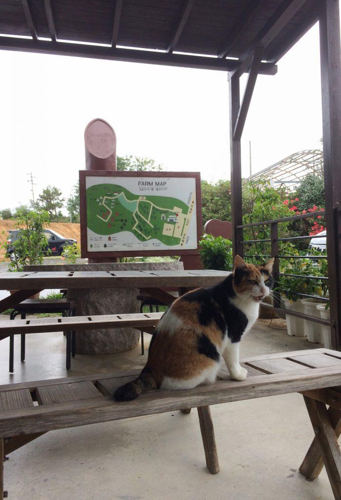 コーヒー園5